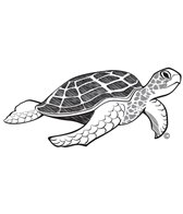 H2O Toos Turtle Temporary Tattoo